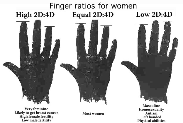 Ratios of 2nd digit (index finger) to 4th digit (ring finger).