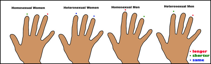 Researchers have found a link between index and ring finger lengths and homosexuality.