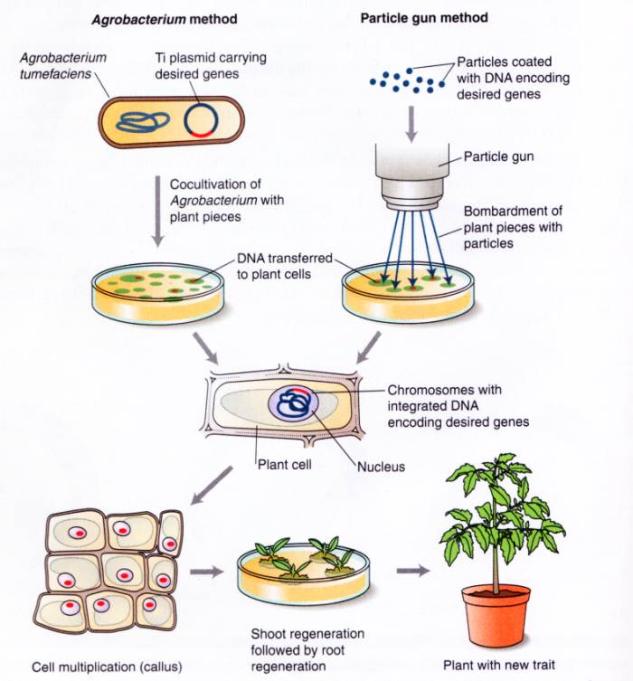microbial transformation for production of steroids